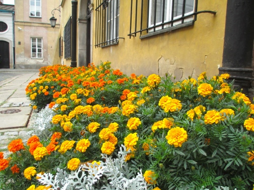 Syyskuun alun kukkaloistoa